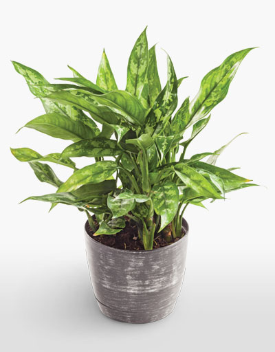 Shop floral weekly specials easy care tropical plants for Easy care outdoor plants