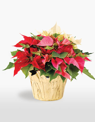 Shop Floral Weekly Specials Tri Colored Centerpiece